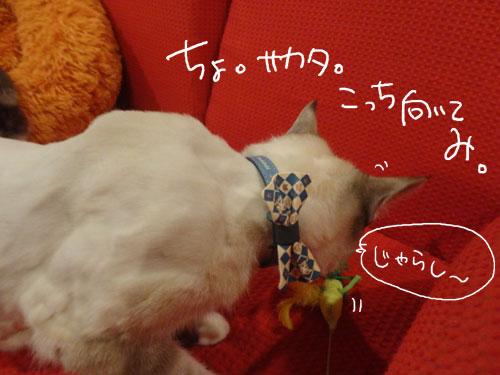 20120807_4.jpg
