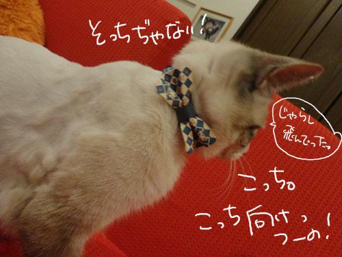 20120807_5.jpg