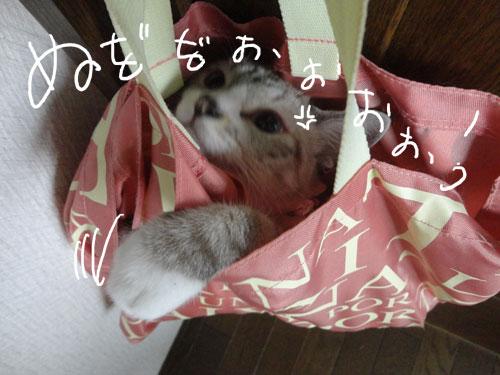 20120816_10.jpg