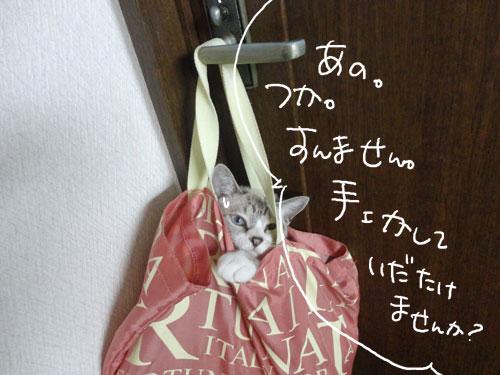 20120816_11.jpg