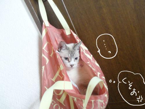 20120816_12.jpg