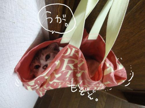 20120816_6.jpg