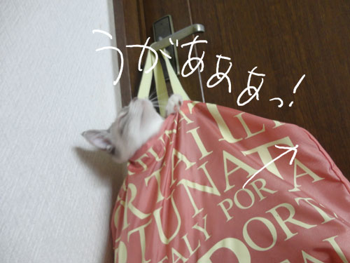 20120816_8.jpg