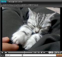 遊んでて突然気絶する猫