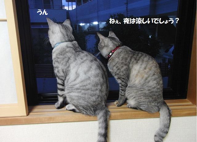 夜景を観る2匹