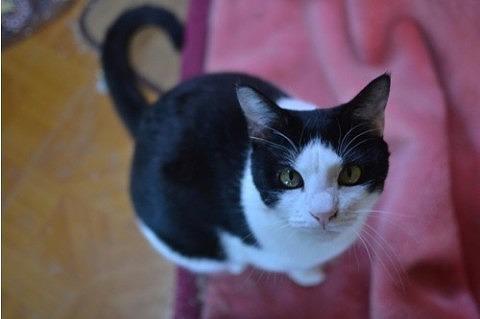 cat_20842_1.jpg