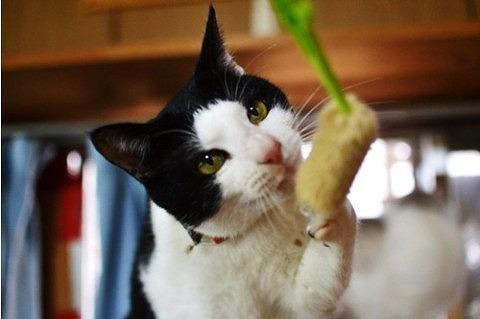 cat_20842_2.jpg