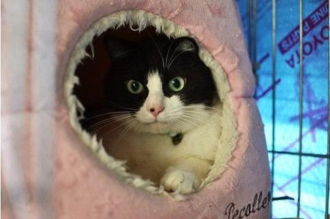 cat_20843_1.jpg