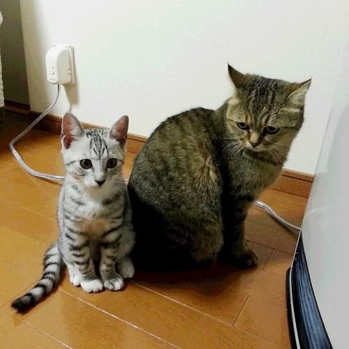 satogo_mugi500.jpg