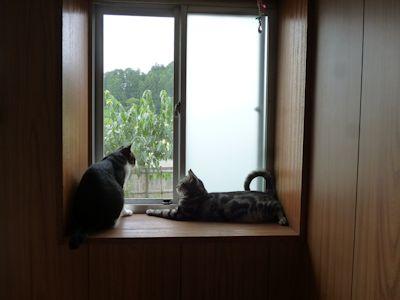 仲悪猫らが接近?
