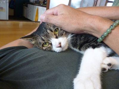 困ってる猫1