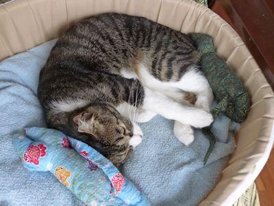昼も猫ベッドin1