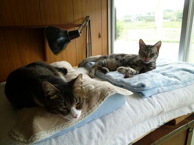 最近の猫ら