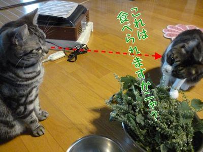 それぞれ目的は違う猫ら