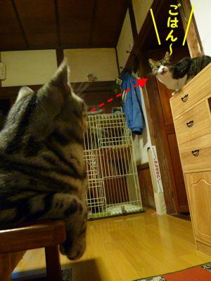 ゴハン待ちの猫たち1