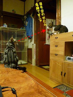 ゴハン待ちの猫たち2