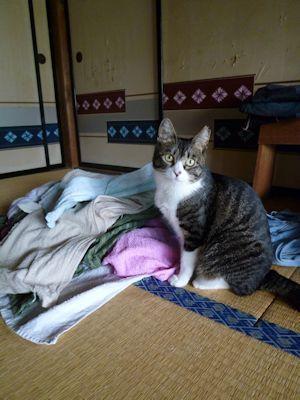 ふくは洗濯物が好き