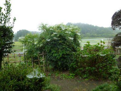 小糠雨の朝