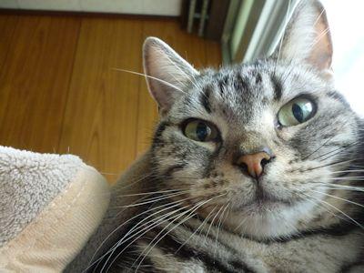 猫団子拒否?