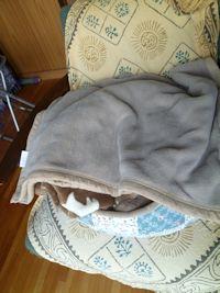 こっちの毛布の塊は…