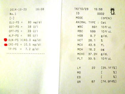 20141023血液検査結果