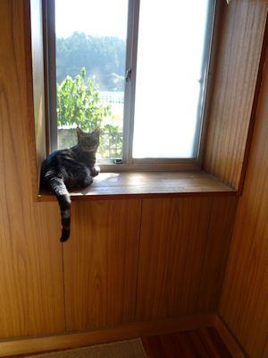 出窓に上がった!