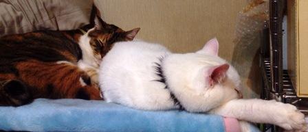 2014十日えびす猫寝る