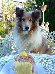 チェルシー10才誕生日