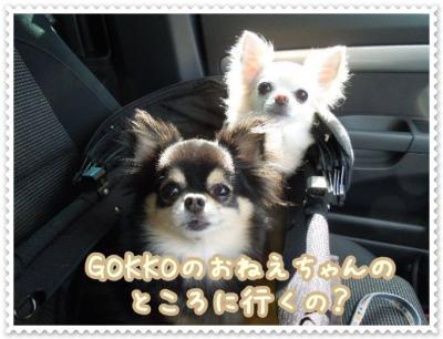 DSCN2011_20120806215853.jpg