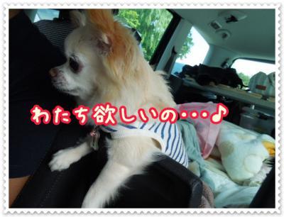 DSCN2129_20120822125521.jpg