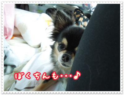 DSCN2130_20120822125521.jpg