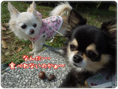 DSCN3520_20121025183809.jpg