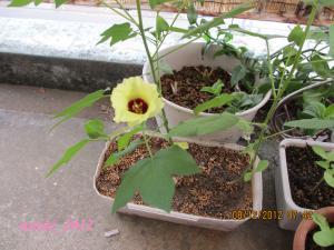 20120812_cotton_convert.jpg