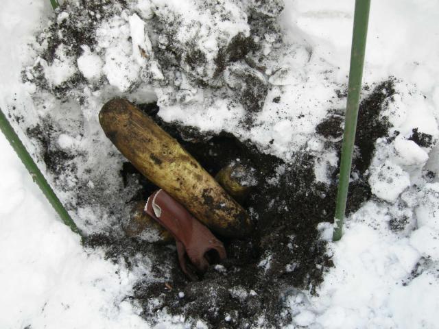 雪の下☆大根①