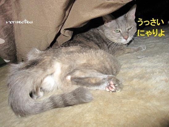 004_20121210181753.jpg