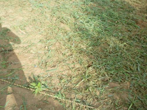 草刈りよん