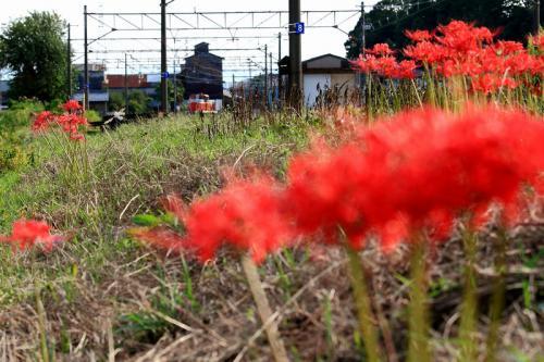 2012年10月8日 美濃赤坂線1-1