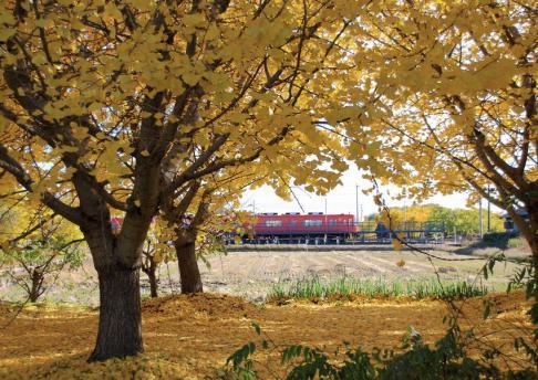 2012年11月25日祖父江イチョウと赤い電車