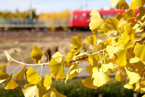 2012年11月25日 祖父江イチョウと赤い電車 その2