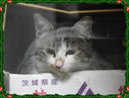 2012 ひめちゃんの日常(12月) 035