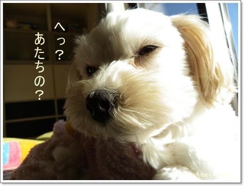 2012 ひめちゃんの日常(12月) 050