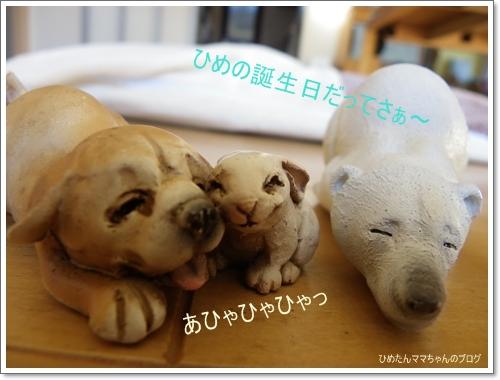 2012 ひめちゃんの日常(12月) 044