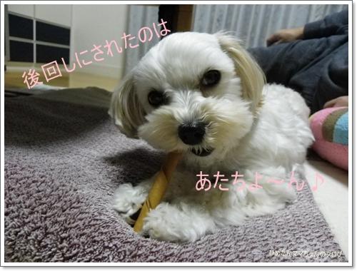 2012 ひめちゃんの日常(12月) 081