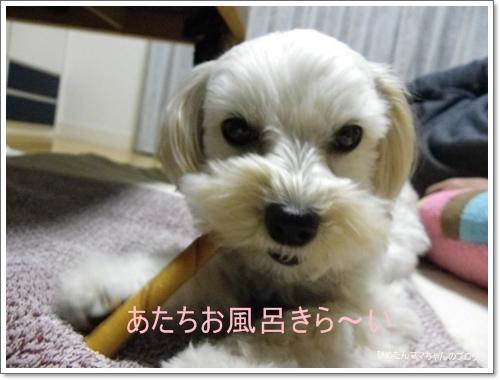 2012 ひめちゃんの日常(12月) 082
