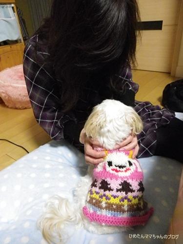 2012 ひめちゃんの日常(12月) 070
