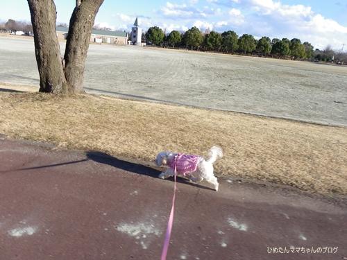 2013 桜の公園 001 (1)