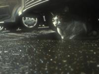 h17猫車の下で雨宿り200