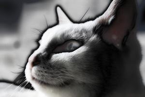 s11白猫もなんにゃ02