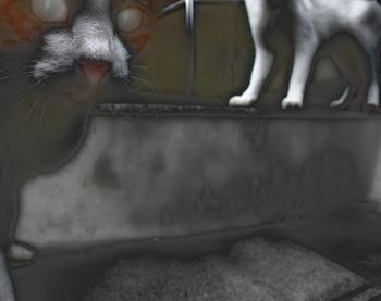 s11猫おちつかんにゃ