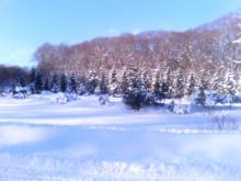 雪に埋もれて・・・。